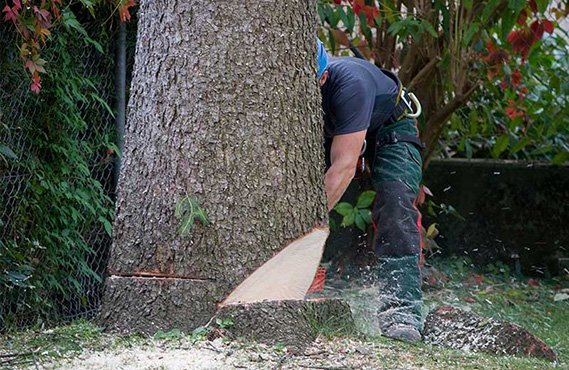 Tree and Lawn Care Services