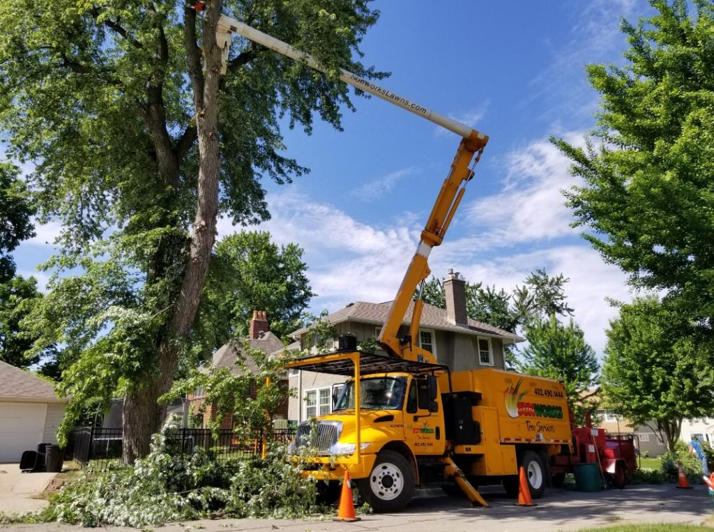 tree trimming and removal in Omaha, NE