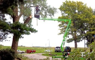 Tree maintenance includes hard to reach tree and limb trimming