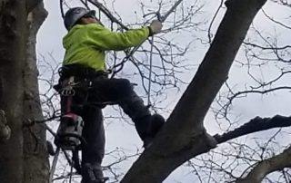 Tall tree limb removal