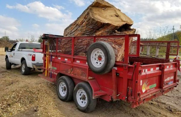 large tree hauler