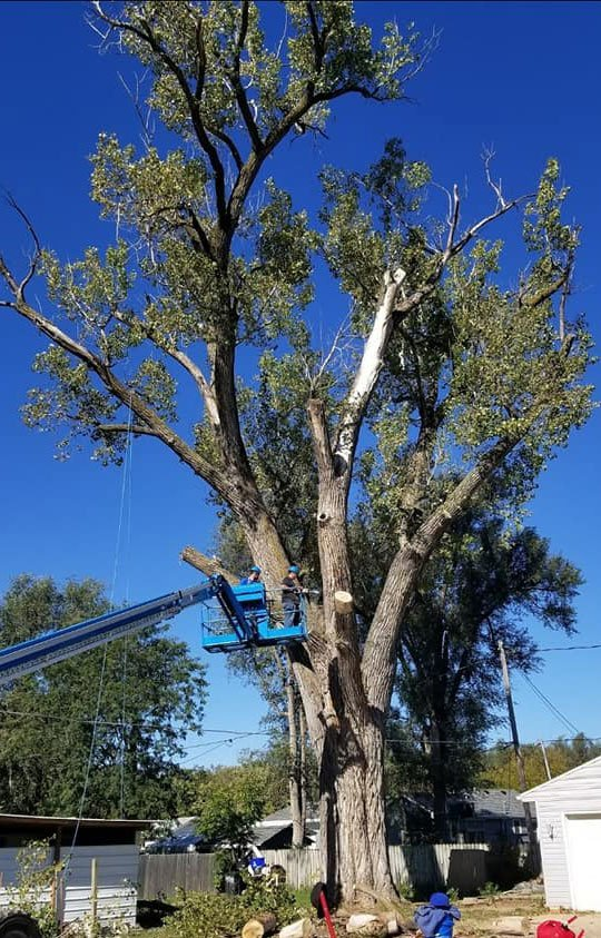 tree service with machinery