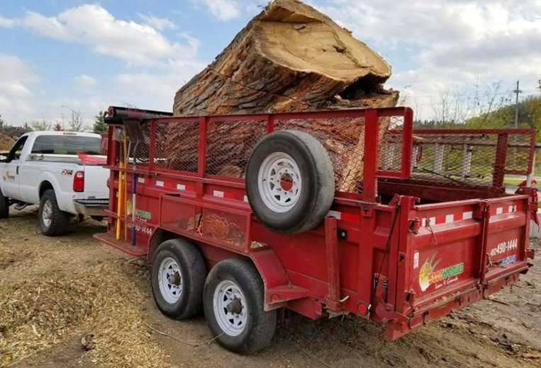 large tree removal in trailer