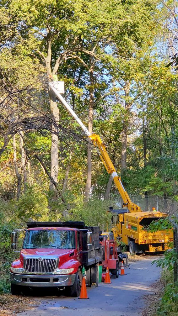 zoo large tree removal